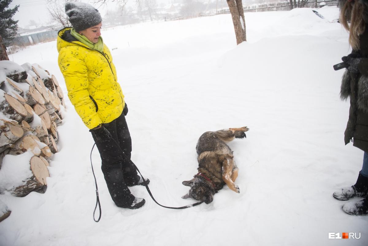 Хотела корги, подарили енотовидную собаку: репортаж из уральской деревни, где живёт необычный зверь