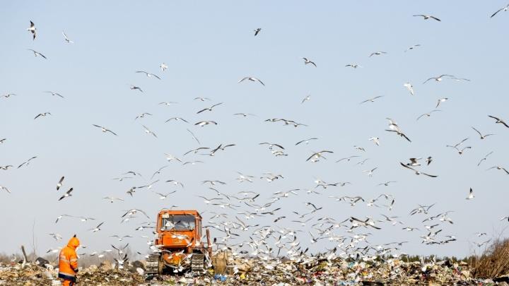 В Брагино, где жаловались на мусорный запах, взяли пробы воздуха: результаты