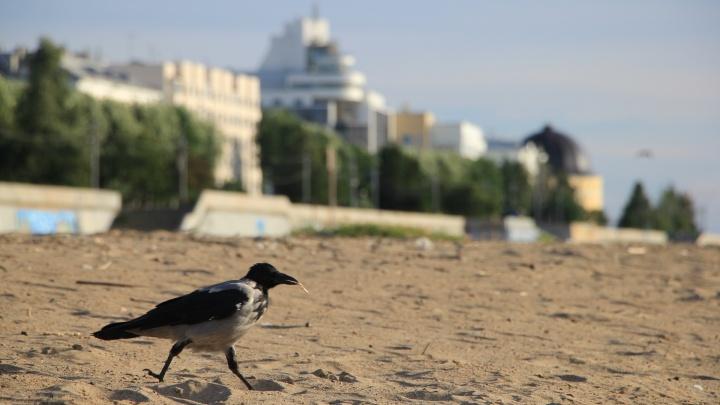 Не прячьте купальники в шкаф — жара вернется в Поморье на следующей неделе