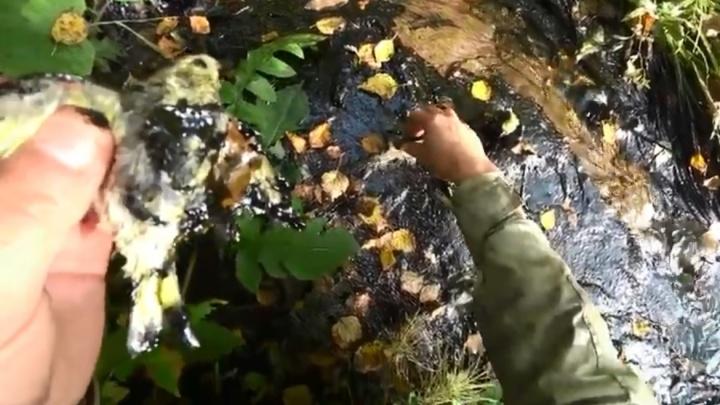 Ручей трупов: свердловчанин обнаружил десятки мертвых птиц в воде у военного городка