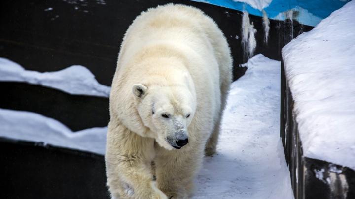 В зоопарке построят трёхметровый маяк для белых медведей