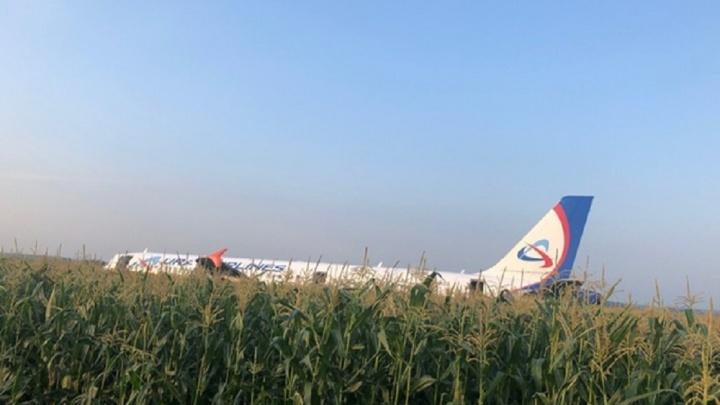 После аварийной посадки самолета в поле Росавиация попросила отчитаться о защите аэропортов от птиц