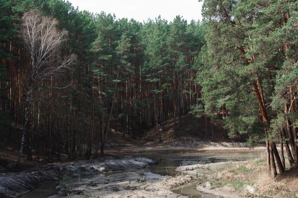 Роща — очень популярное у тюменцев место, поэтому многих и волновало — когда же всё-таки тут обработают лес
