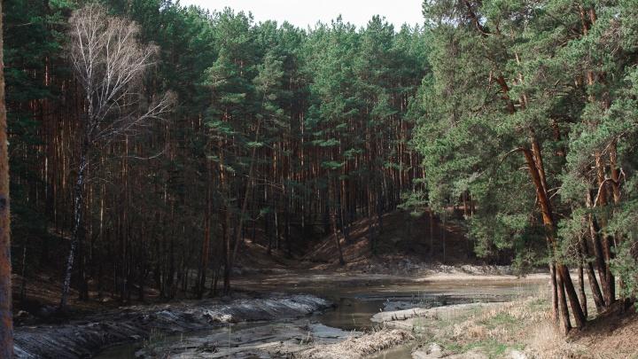 Гилевскую рощу, Затюменский и другие парки начнут обрабатывать от клещей только к майским праздникам