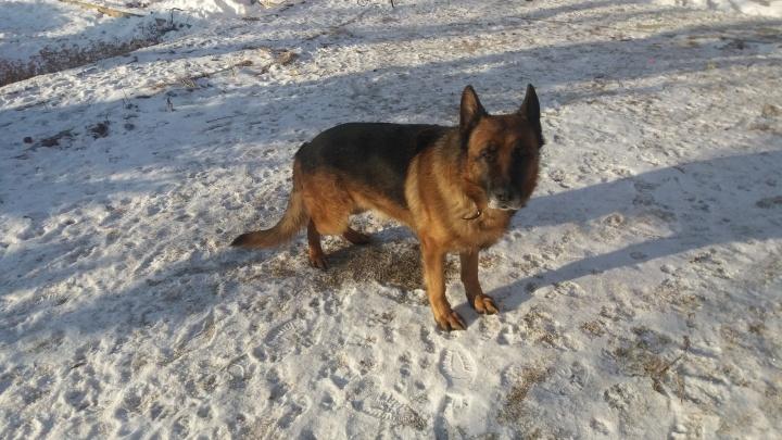 «Жил на бахчисарайском рынке»: собака, пропавшая в Челябинске шесть лет назад, нашлась в Крыму