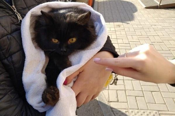 Зоозащитники считают, что черных котов могут использовать в ритуалах