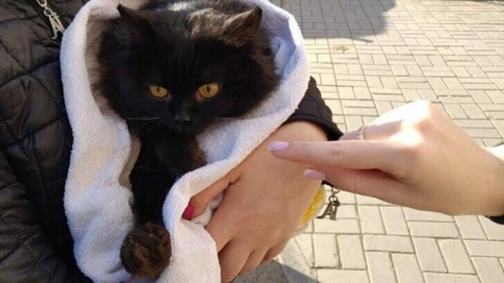 «Сатанисты стали хитрее»: зоозащитники просят не отдавать незнакомцам черных котов перед Хеллоуином