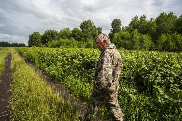 59-летний бывший топ-менеджер якутской компании УКПП Андрей Бураков занялся разведением ягоды в Новосибирской области