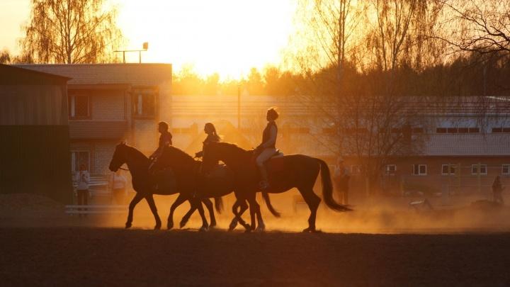 «Осторожно! Осторожно!»: в Ярославле полицейские устроили облаву на наездниц