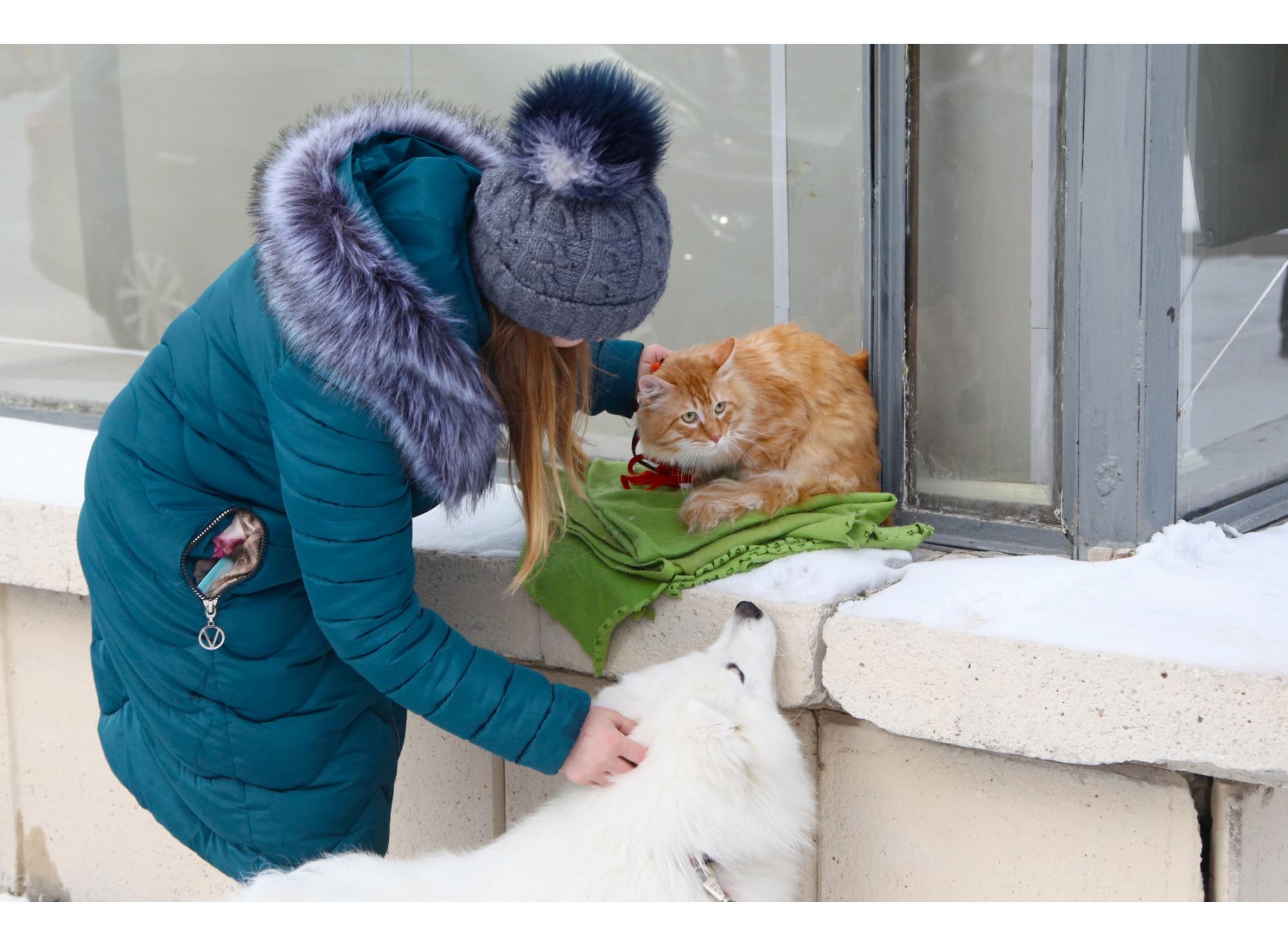 В Новосибирске довольно часто проходят акции помощи собакам и кошкам