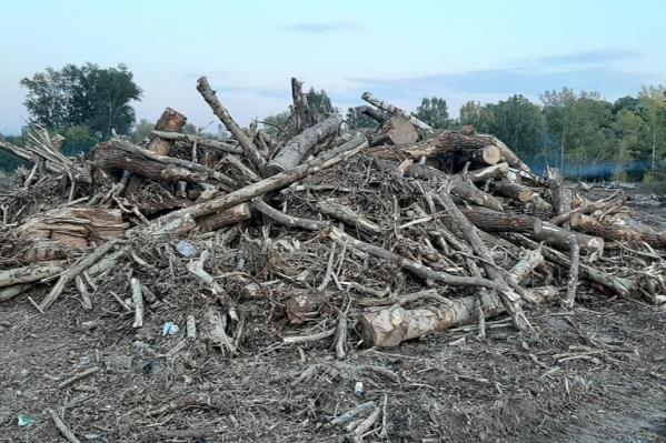 Рабочие вырубают берёзы, клёны и кустарники