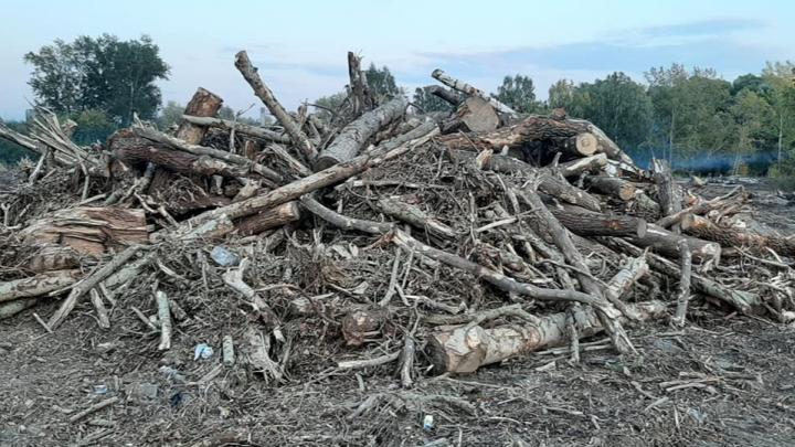 У городского пляжа начали массово рубить деревья — их сжигают и раскатывают бульдозером