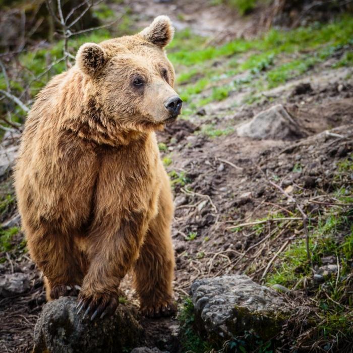 В Кемеровской области медведь воровал тушенку и конфеты в детском лагере