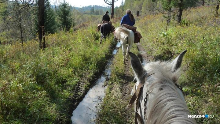 Путешествие на выходные: верхом на коне по осеннему лесу за 17 тысяч