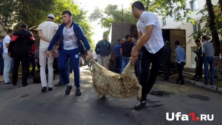 Жертвоприношение на Курбан-байрам жителям Уфы предложили проводить на одной площадке