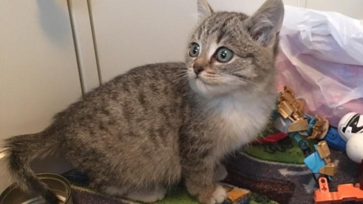 «Вытаскивали всей улицей»: испуганный котёнок четыре раза прятался в машинах от новых хозяев