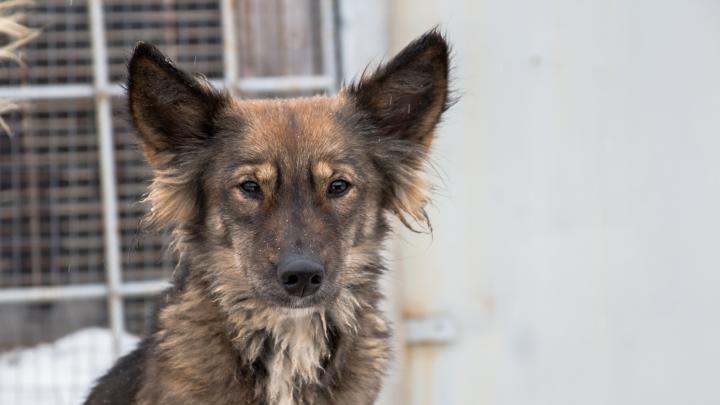До конца года в Самаре отловят 4,5 тысячи бездомных собак