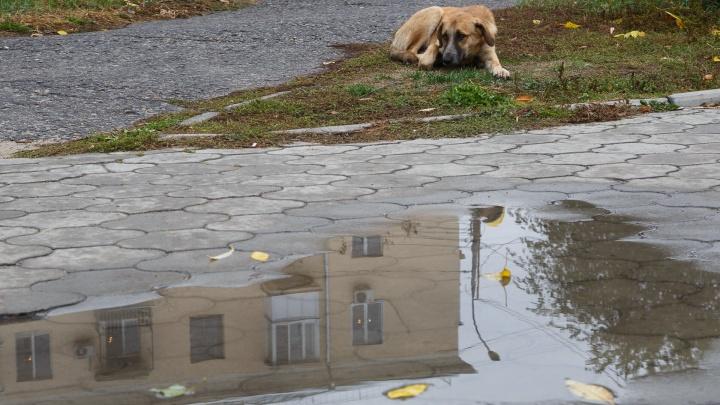 В Волгоград накануне выходных придут дожди и холод