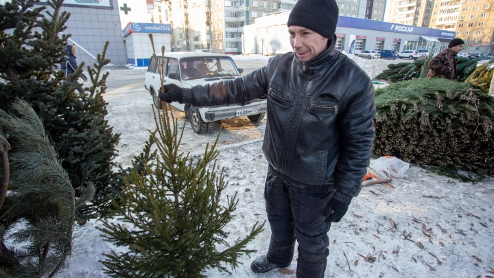 В Челябинске откроют более 30 точек по приёму ёлок.Куда можно сдать новогодние деревья