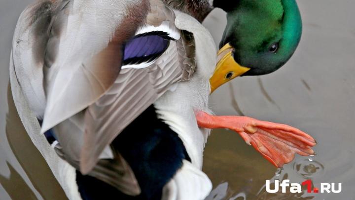 Защититься от птичьего гриппа: на трассах в Башкирии выставили ветеринарные посты