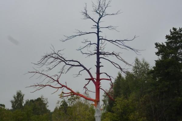 """Дерево возле школы <nobr class=""""_"""">№ 51</nobr>"""