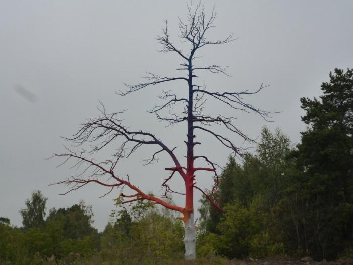 Дерево возле школы  № 51