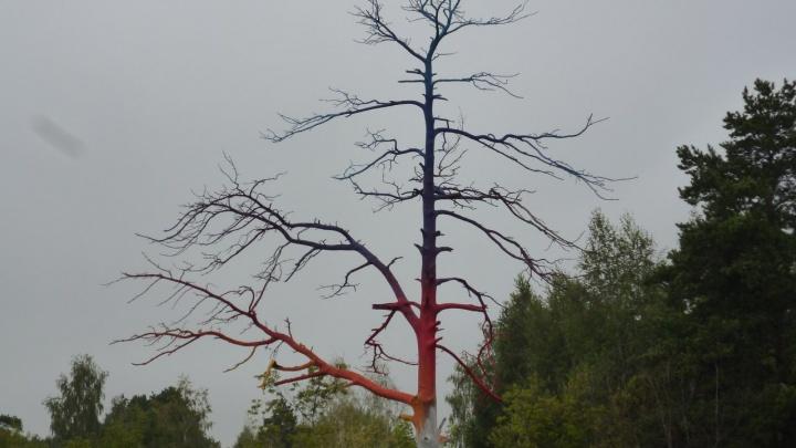 Голое и разноцветное: в Мочище появилось загадочное дерево