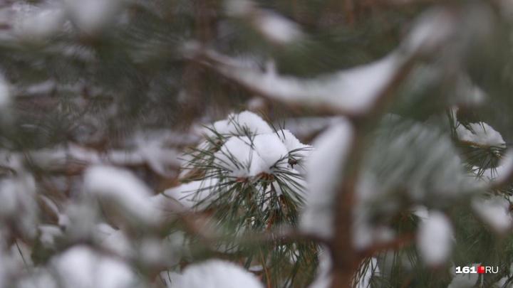 Донские елки будут усиленно охранять полицейские и казаки