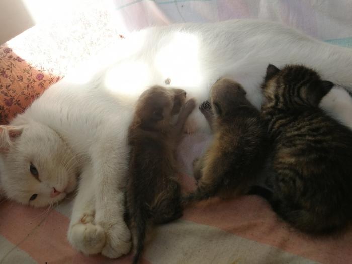 Она приняла маленьких енотов как родных