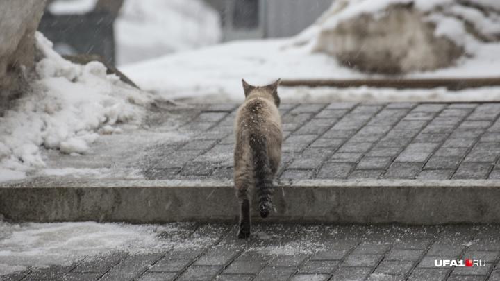 В Уфе решают, что делать с бездомными животными в республике