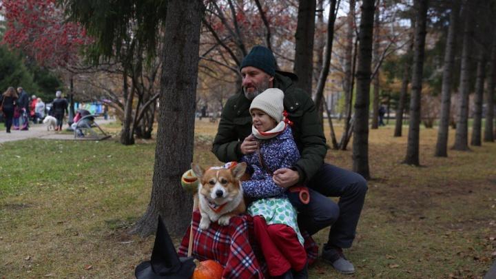 Симпатичные породистые собаки пришли сфотографироваться с новосибирцами в Первомайский сквер