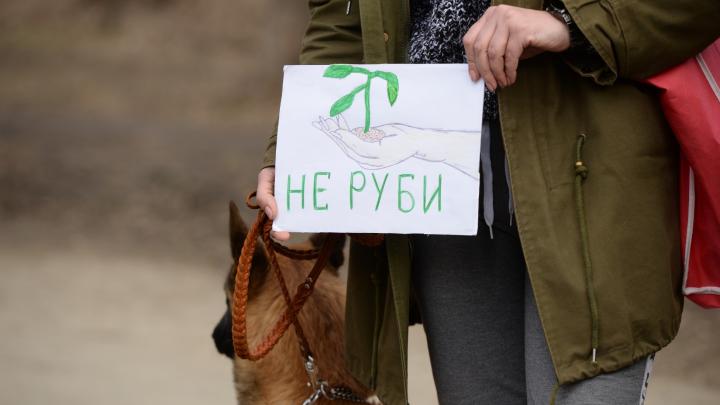 Московская компания потребовала отменить конкурс на реконструкцию Зеленой Рощи