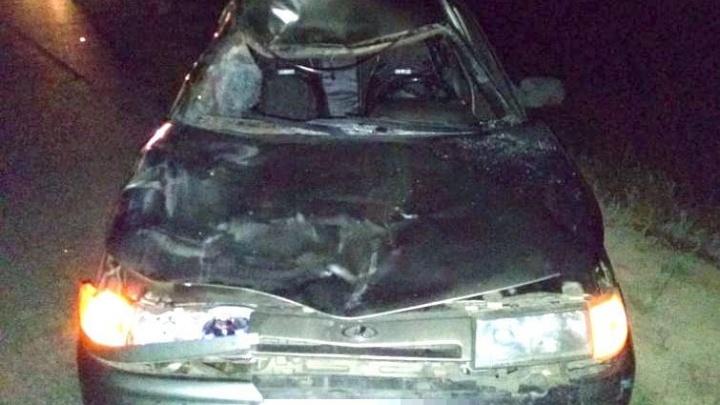 В Башкирии «десятка» влетела в корову, животное погибло, а люди в машине пострадали