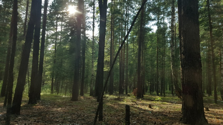 В Курганской области леса открыли для посещений