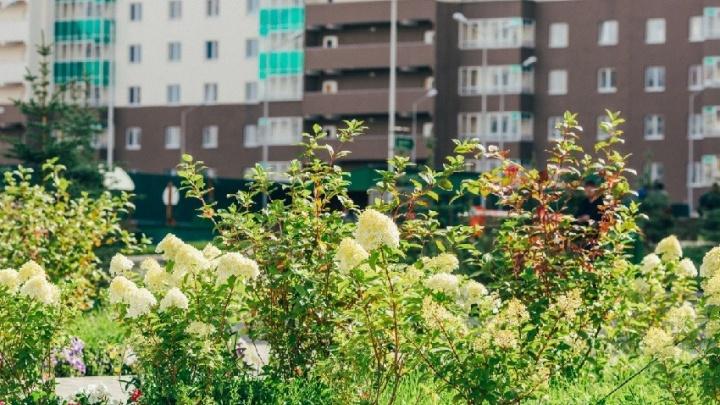 Грин-зона уральской столицы: в Екатеринбурге появился жилой квартал с голубыми елями и пиратским кораблём