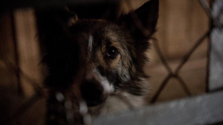 Ловцы бездомных животных застрелили пять сотен опасных зверей
