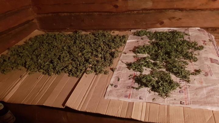 Сушил травку в бане: сотрудники ФСБ нашли у жителя Сызраниплантацию конопли и 5 кг марихуаны