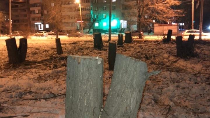 Прокуратура проверит законность массовой вырубки деревьев на Северо-Западе Челябинска