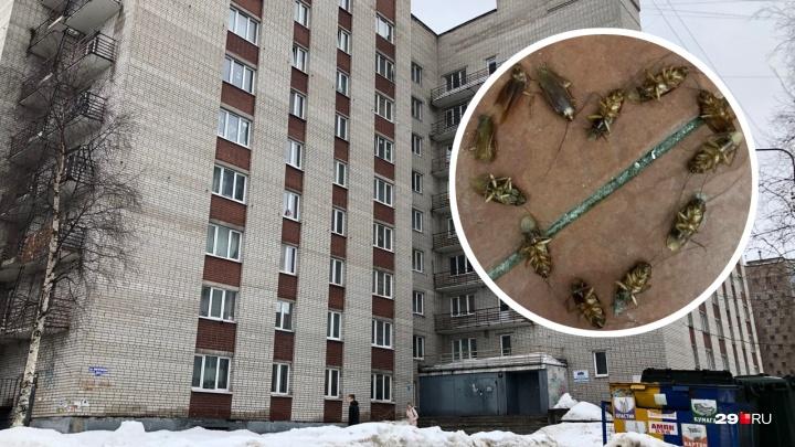 Тараканы, плесень и прочие «радости»: как живут студенты в общежитиях САФУ