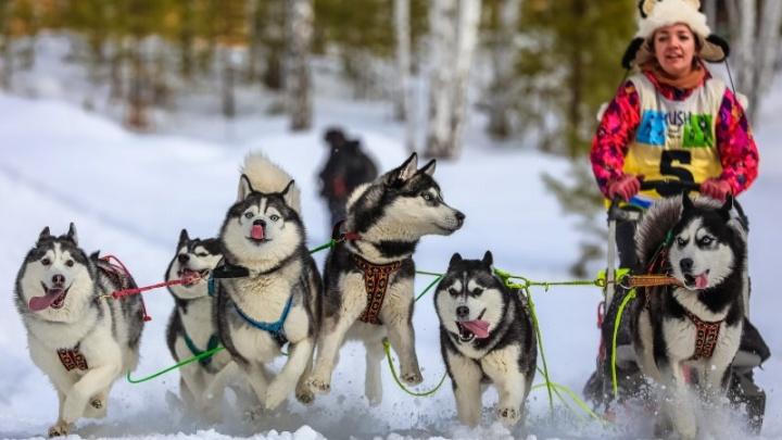 Афиша 74.RU: смеёмся над Уиллом Смитом и Райкиным, гоняем на собаках, смотрим скандинавское кино