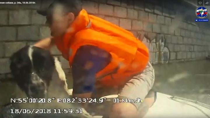 Видео: спасатели вытащили из Оби унесённую течением собаку