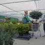 Клубника с ладонь и малина на дереве: что выращивают челябинские садоводы
