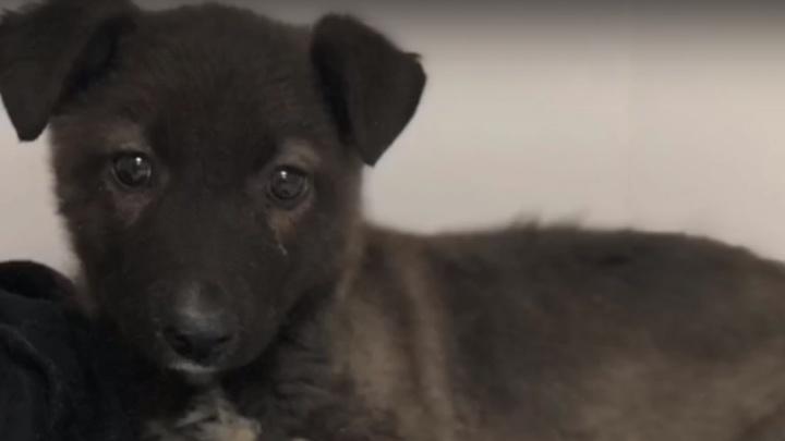 «Умрёт на морозе или под колесами машин»: в Волгограде спасают щенка с кривыми от голода лапами