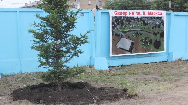 На месте непостроенного бизнес-центра на площади Маркса появились пихты