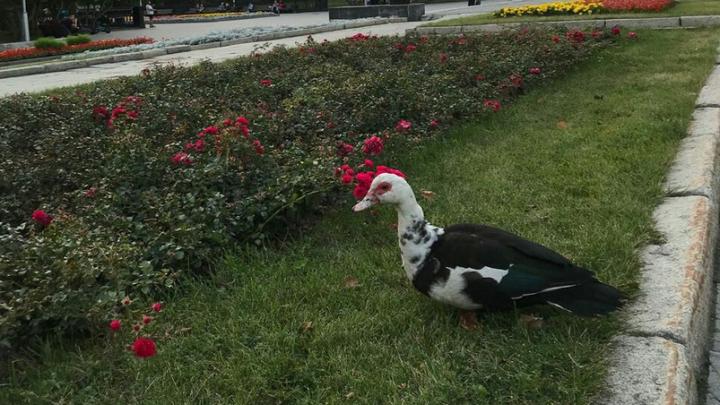 Прохожие заметили на площади Ленина необычную птицу