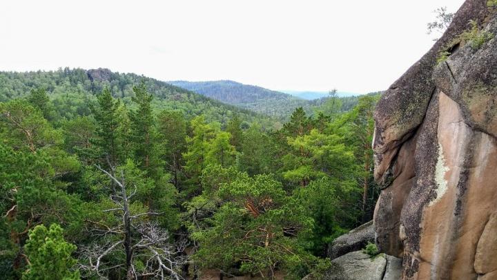 Медведь вышел почти к Свердловской и загнал туристов на скалу «Чертов палец»
