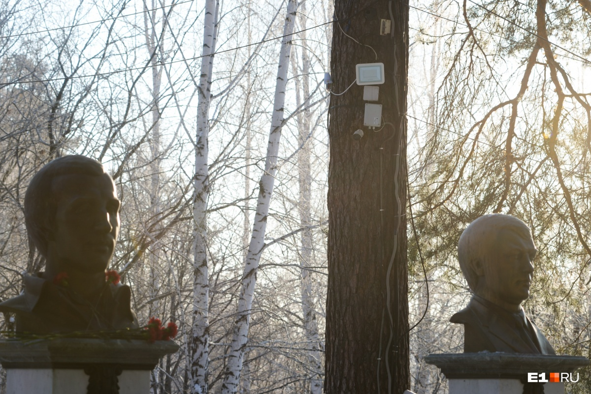 На дереве действительно установлена видеокамера