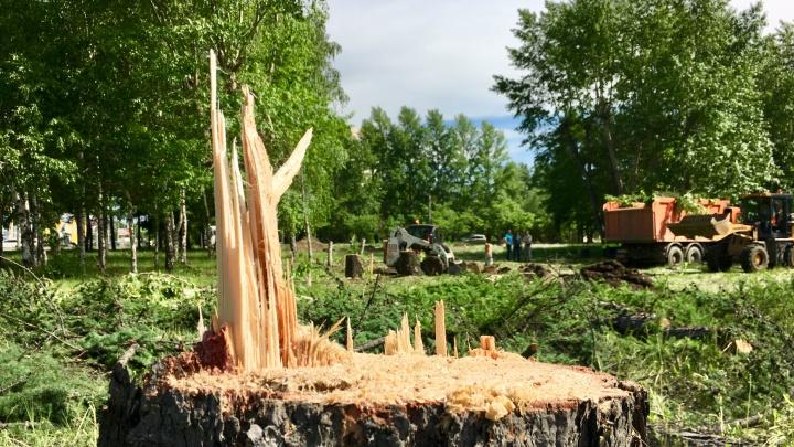 132 пенька вместо зелёного островка: в Челябинске на кольце улицы Блюхера начали вырубать деревья