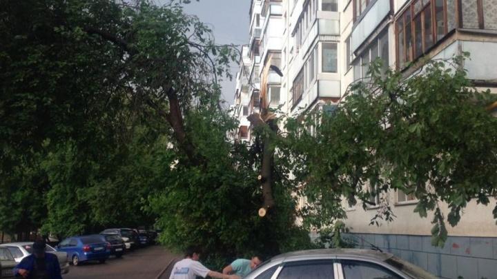 Затопленные улицы, сломанные деревья и забитые ливневки: в Уфе разбушевалась стихия