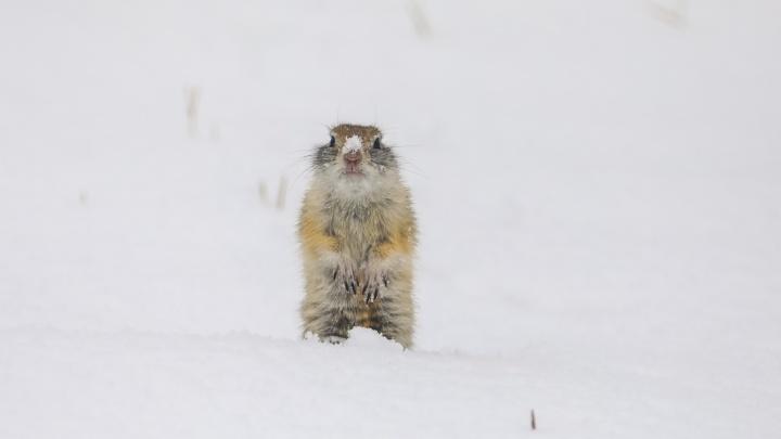 Снегопад в Красноярске: город тонет в растаявшем снегу